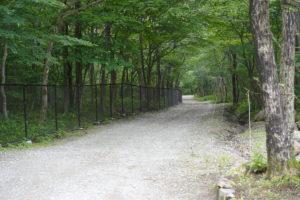 maple road